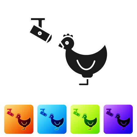 Black Chicken farm and wireless Controlling CCTV security camera icon isolated on white background. Set icons in color square buttons. Vector Illustration