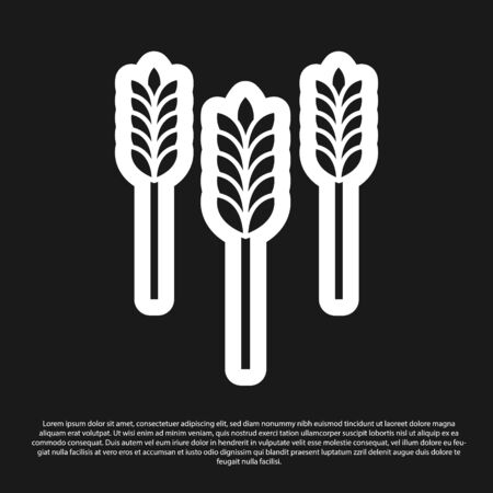 Black Cereals set with rice, wheat, corn, oats, rye, barley icon isolated on black background. Ears of wheat bread symbols. Vector Illustration