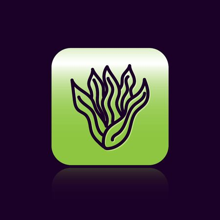 Black line Seaweed icon isolated on black background. Underwater seaweed spirulina, aquatic marine algae plant. Vegan and vegetarian food. Green square button. Vector.