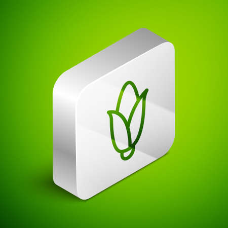Isometric line Corn icon isolated on green background. Silver square button. Vector.