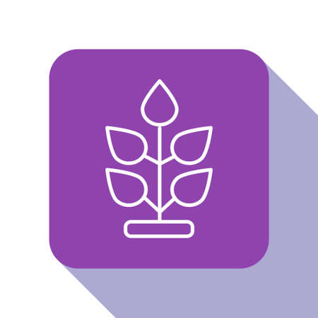 White line Plant icon isolated on white background. Seed and seedling. Leaves sign. Leaf nature. Purple square button. Vector