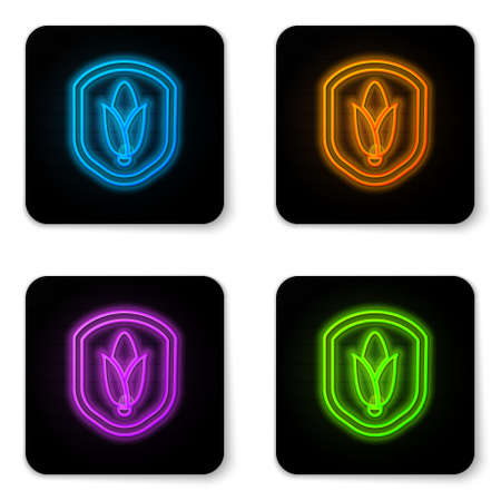 Glowing neon Shield corn icon isolated on white background. Security, safety, protection, privacy concept. Black square button. Vector