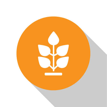 White Plant icon isolated on white background. Seed and seedling. Leaves sign. Leaf nature. Orange circle button. Vector