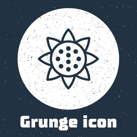 Grunge line Sunflower icon isolated on grey background. Monochrome vintage drawing. Vector