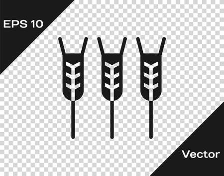 Black Cereals set with rice, wheat, corn, oats, rye, barley icon isolated on transparent background. Ears of wheat bread symbols. Vector