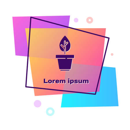 Purple Plant in pot icon isolated on white background. Plant growing in a pot. Potted plant sign. Color rectangle button. Vector Illustration