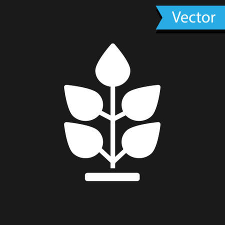 White Plant icon isolated on black background. Seed and seedling. Leaves sign. Leaf nature. Vector