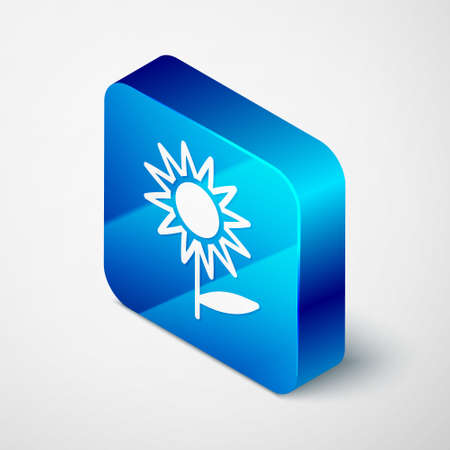 Isometric Sunflower icon isolated on grey background. Blue square button. Vector Çizim