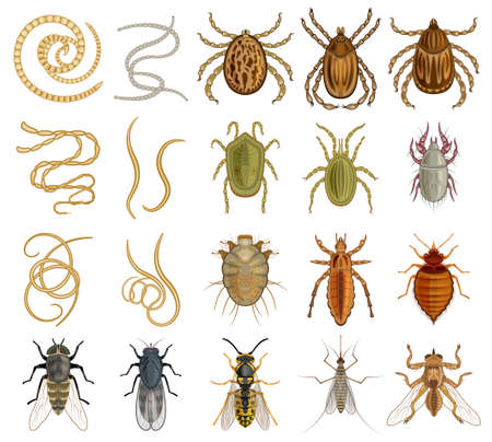 Parasite vector cartoon set icon. Vector illustration insect on white background. Isolated cartoon set icon parasite.