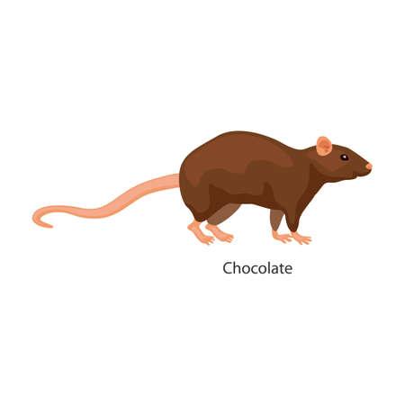 Rat vector icon.Cartoon vector icon isolated on white background rat. Vecteurs