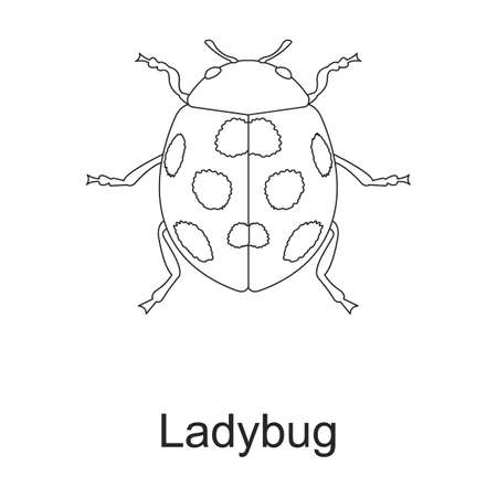 Beetle insect vector outline icon. Vector illustration bug insect on white background. Isolated outline illustration icon of beetle pest .