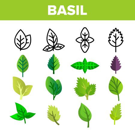 Basil Leaves Vector Thin Line Icons Set. Basil, Aromatic Spice Green, Violet Leaves Linear Pictograms. Organic Italian Culinary Herb with Spicy Taste, Fresh Foliage Color Flat Illustrations Çizim