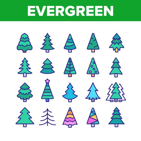 Evergreen Pine Tree Collection Icons Set Vector Thin Line. Evergreen Fir With Needles, Christmas Ornament Concept Linear Pictograms. Nature Forest And Woodland Color Illustrations