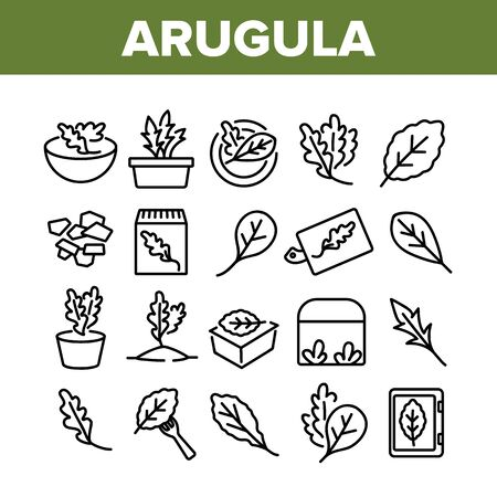 Arugula Or Rucola Collection Icons Set Vector. Arugula Plant In Greenhouse And Garden, On Plate And Fork, Leaf Spice For Meal Concept Linear Pictograms. Monochrome Contour Illustrations