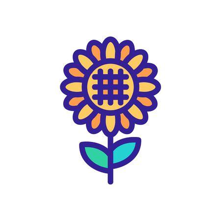 full length view of ripened sunflower icon vector. full length view of ripened sunflower sign. color symbol illustration