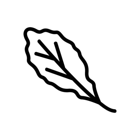 organic arugula leaf icon vector. organic arugula leaf sign. isolated contour symbol illustration