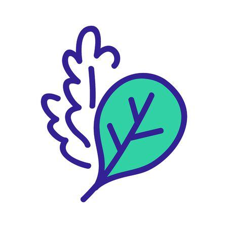 arugula leaves plants icon vector. arugula leaves plants sign. color symbol illustration