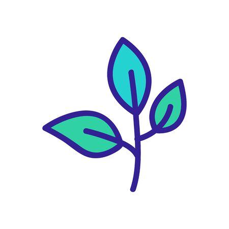 oregano leaves icon vector. oregano leaves sign. color symbol illustration