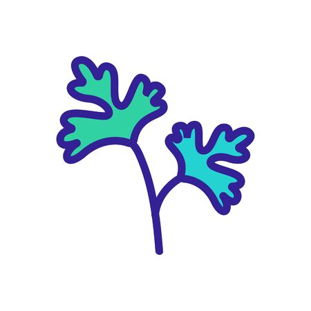 leaves of herbal coriander icon vector. leaves of herbal coriander sign. color symbol illustration
