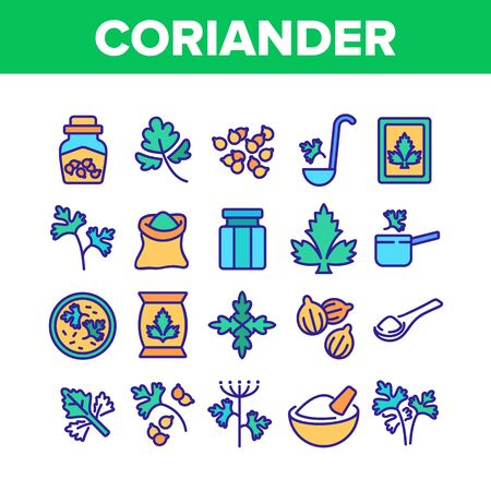 Coriander Herbal Plant Collection Icons Set Vector. Coriander Spice Leaf And Seeds, In Bag And Bottle, On Spoon And Cut Desk Concept Linear Pictograms. Color Illustrations Иллюстрация