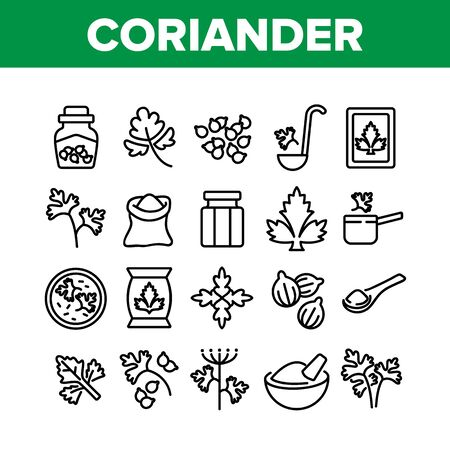 Coriander Herbal Plant Collection Icons Set Vector. Coriander Spice Leaf And Seeds, In Bag And Bottle, On Spoon And Cut Desk Concept Linear Pictograms. Monochrome Contour Illustrations