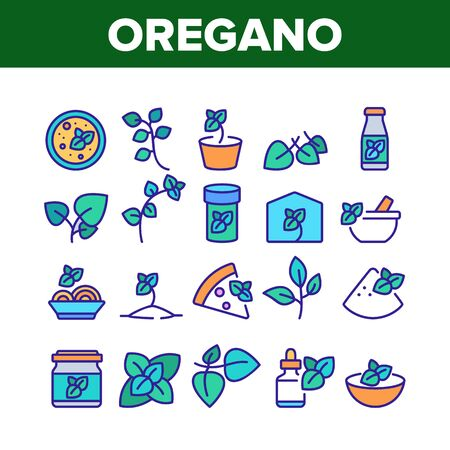 Oregano Herbal Plant Collection Icons Set Vector. Oregano Spice Branch In Greenhouse And Garden, In Pot And Bottle, Spice On Pizza And Soup Concept Linear Pictograms. Color Illustrations