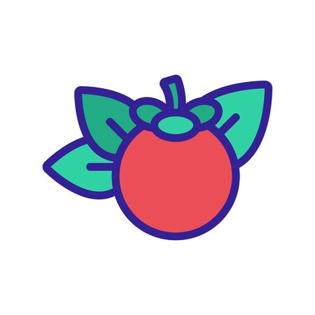 mangosteen citrus fruit icon vector. mangosteen citrus fruit sign. color symbol illustration Illustration
