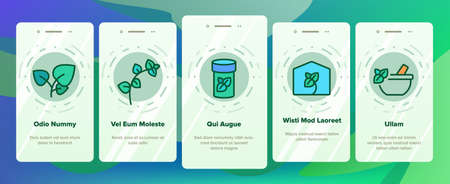 Oregano Herbal Plant Onboarding Mobile App Page Screen Vector. Oregano Spice Branch In Greenhouse And Garden, In Pot And Bottle, Spice On Pizza And Soup Illustrations Stok Fotoğraf - 152168452