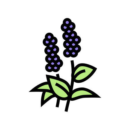 patchouli flowers aromatherapy color icon vector. patchouli flowers aromatherapy sign. isolated symbol illustration