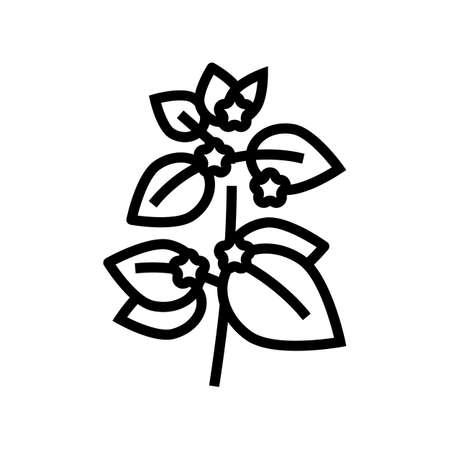 melissa herbal aromatherapy line icon vector. melissa herbal aromatherapy sign. isolated contour symbol black illustration