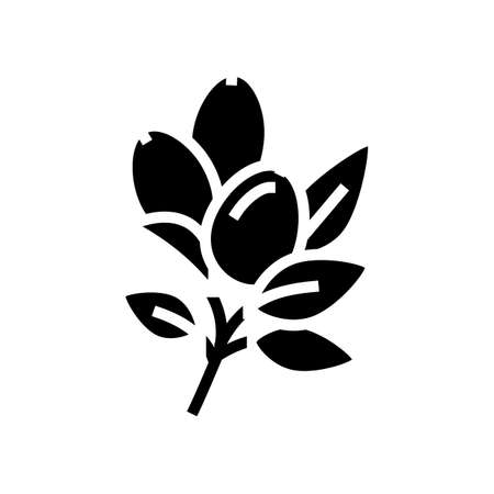 rosehip aromatherapy glyph icon vector. rosehip aromatherapy sign. isolated contour symbol black illustration