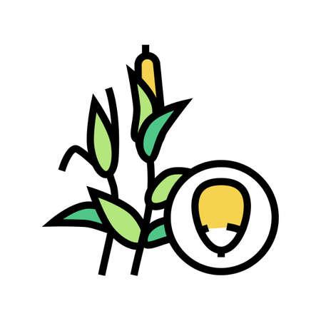 corn groat color icon vector. corn groat sign. isolated symbol illustration