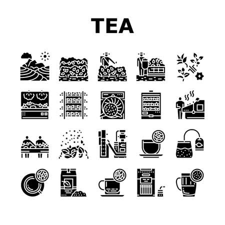 Tea Drink Production Collection Icons Set Vector. Growth Of Tea On Plantation And Harvesting, Cultivation And Sorting, Flavoring And Packaging Glyph Pictograms Black Illustrations Vector Illustration