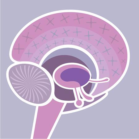 brainy: Brain map vector illustration clip-art image Illustration
