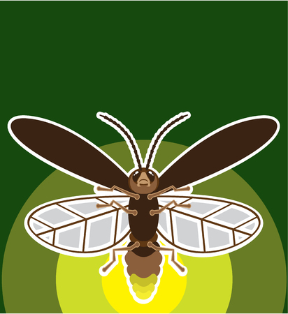 Firefly vector illustration clip-art image bug art