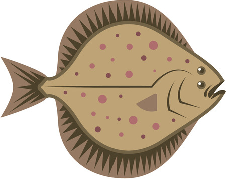flounder: Flatfish vector illustration clip-art image