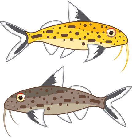tiny: Tiny Catfish vector illustration of aquarium fish