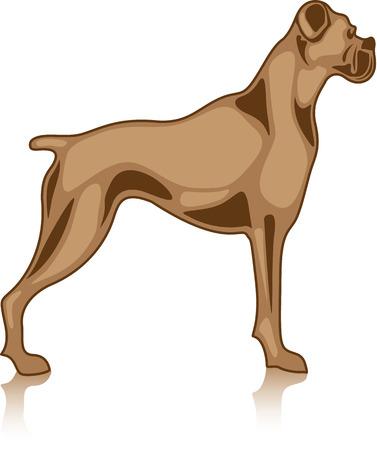 Bulldog animal vector image illustration
