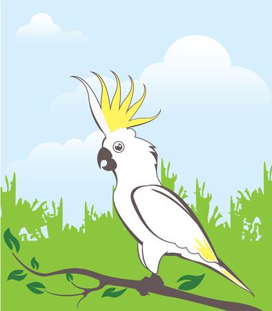 White parrot vector illustration exotic bird image Иллюстрация