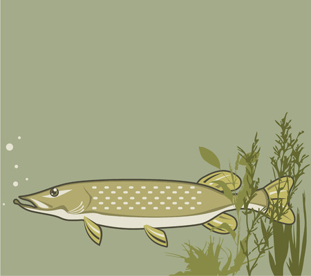 pike: Northern Pike vector illustration clip-art