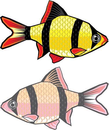 Barb aquarium fish vector image