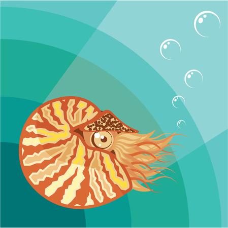 Nautilus vector illustration clip-art image