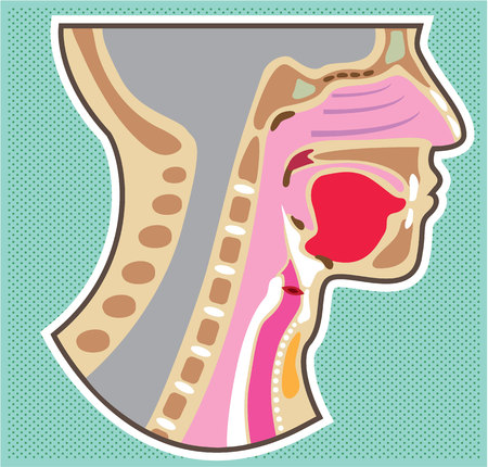 Throat anatomy vector illustration clip-art image Иллюстрация