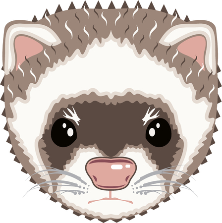 gaze: Ferret vector illustration clip-art image eps file