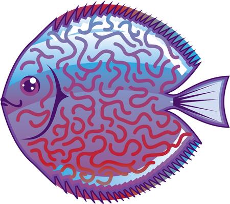 cichlid: Discus Aquarium fish vector illustration clip-art image
