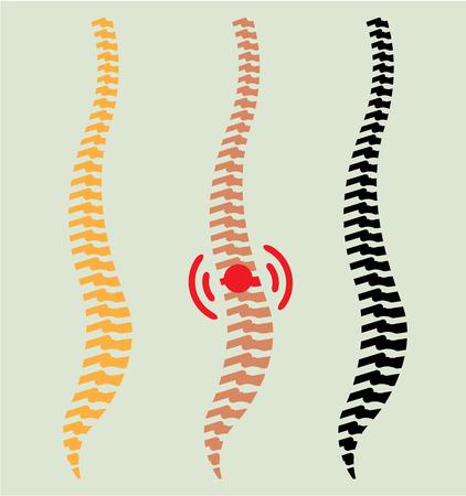 Spine vector illustration clip-art image vector Illustration