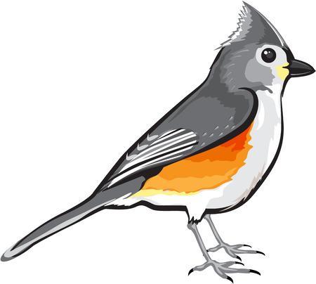 Símbolo De La Primavera - Americano Petirrojo Pájaro Aislado En ...