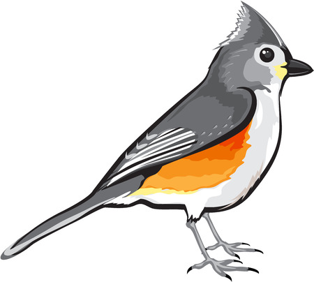 Tufted Titmouse Bird vector illustration clip-art graphic design file