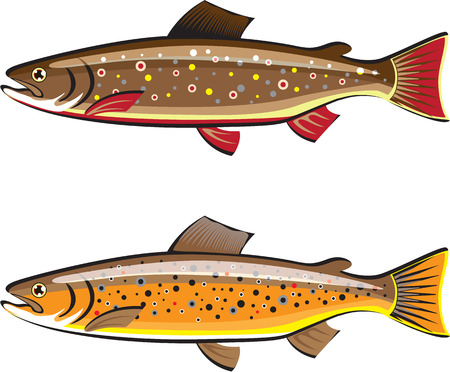 trout: Brown and Brook trout vector illustration clip-art image