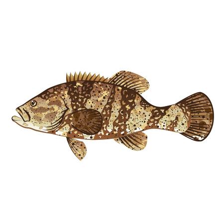 Goliath Grouper Gamefish ocean vector illustration  イラスト・ベクター素材